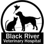 Black River Veterinary Hospital